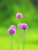 Fila de las flores Imagen de archivo libre de regalías