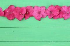 Fila de las flores de la hortensia Imágenes de archivo libres de regalías
