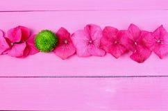 Fila de las flores de la hortensia Imagen de archivo