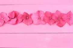 Fila de las flores de la hortensia Foto de archivo