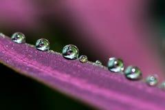 Fila de las gotitas de agua en licencia púrpura Fotografía de archivo libre de regalías