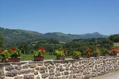 Fila de las plantas en una pared, Navarra, España septentrional del geranio fotografía de archivo