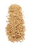 Fila de las semillas de coriandro secadas orgánicas Imagenes de archivo
