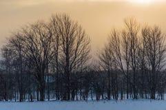 Fila de las siluetas del árbol mientras que él ` s que nieva en la puesta del sol Imagenes de archivo