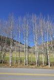 Fila de los árboles de abedul deshojados del otoño a lo largo de un camino del campo Fotografía de archivo libre de regalías