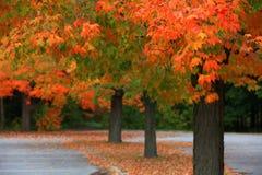 Fila de los árboles del otoño Imagen de archivo libre de regalías