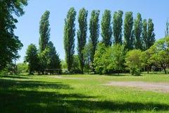 Fila de los árboles del resorte fotografía de archivo libre de regalías