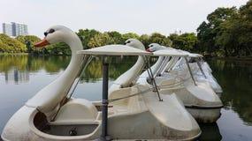 Fila de los barcos del ciclo en el agua en el parque público Fotografía de archivo