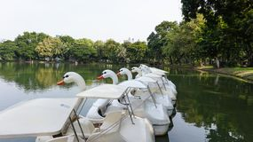 Fila de los barcos del ciclo en el agua en el parque público Imagen de archivo