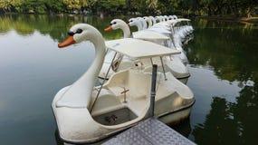 Fila de los barcos del ciclo en el agua en el parque público Foto de archivo libre de regalías