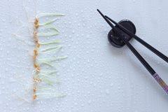 Fila de los brotes del trigo y de los palillos japoneses en soporte Vagos ligeros Fotografía de archivo libre de regalías
