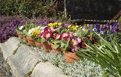 Fila de los crisoles de flor Fotografía de archivo