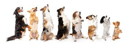 Fila de los perros que se sientan hasta el petición lateral imagen de archivo libre de regalías