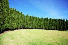Fila de los árboles de pino Imágenes de archivo libres de regalías