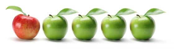 Fila de manzanas Foto de archivo libre de regalías