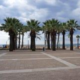 Fila de palmeras en la playa de la ciudad Imagen de archivo