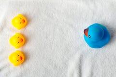 Fila de patos amarillos y azules en el fondo blanco Endecha del plano del bebé Dirección y concepto de siguiente fotos de archivo