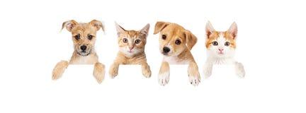 Fila de perritos y de gatitos sobre bandera en blanco Imagen de archivo