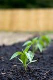 Fila de plantas de semillero Fotos de archivo