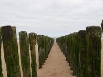 Fila de rompeolas de madera en la playa Fotografía de archivo