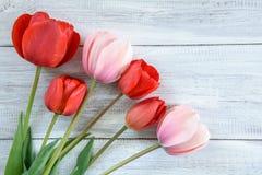 Fila de tulipanes Foto de archivo