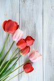 Fila de tulipanes Fotos de archivo