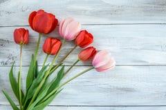 Fila de tulipanes Fotografía de archivo