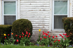 Fila de tulipanes Fotos de archivo libres de regalías