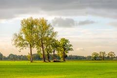 Fila degli alberi alla luce solare di primo mattino Fotografia Stock Libera da Diritti