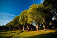 Fila degli alberi con la luce solare fotografia stock