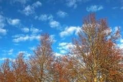 fila degli alberi di autunno al sole, cielo blu immagine stock libera da diritti