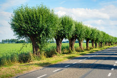 Fila degli alberi di salice accanto ad una strada campestre Fotografie Stock
