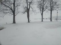 Fila degli alberi durante la bufera di neve fotografie stock