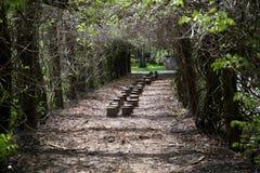 Fila degli alberi in parco fotografie stock