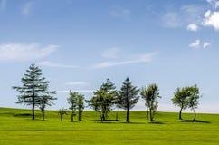 Fila degli alberi su un campo da golf Fotografia Stock
