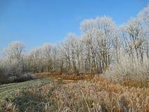 Fila degli alberi un giorno di inverno Fotografie Stock Libere da Diritti