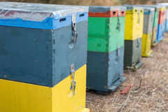 Fila degli alveari variopinti con gli alberi nei precedenti Alveari accanto ad un'abetaia di estate Honey Beehives nel prato Fotografie Stock Libere da Diritti