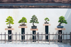 Fila dei bonsai Fotografie Stock Libere da Diritti