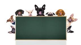 Fila dei cani dietro il cartello o l'insegna immagini stock libere da diritti