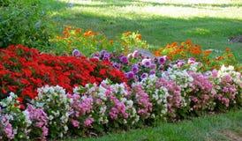 Fila dei fiori variopinti fotografia stock