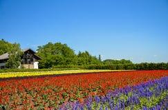 Fila dei fiori variopinti con sole Fotografia Stock Libera da Diritti