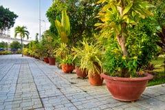 Fila dei fiori in vaso sulla pavimentazione delle mattonelle con la palma di mattina immagine stock libera da diritti