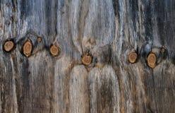 Fila dei nodi in grano di legno Immagine Stock