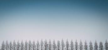 Fila dei pini con chiaro cielo blu Immagini Stock