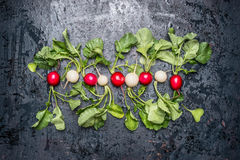 Fila dei ravanelli bianchi e rossi freschi con le foglie su fondo d'annata scuro Fotografia Stock