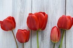 Fila dei tulipani Fotografie Stock Libere da Diritti