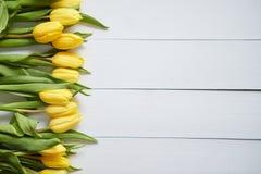 Fila dei tulipani gialli freschi sulla tavola di legno bianca immagini stock