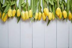 Fila dei tulipani gialli freschi sulla tavola di legno bianca immagini stock libere da diritti