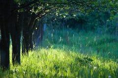Fila del árbol de la mañana fotografía de archivo