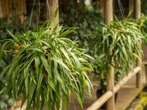 Fila del colgante de las plantas Fotos de archivo